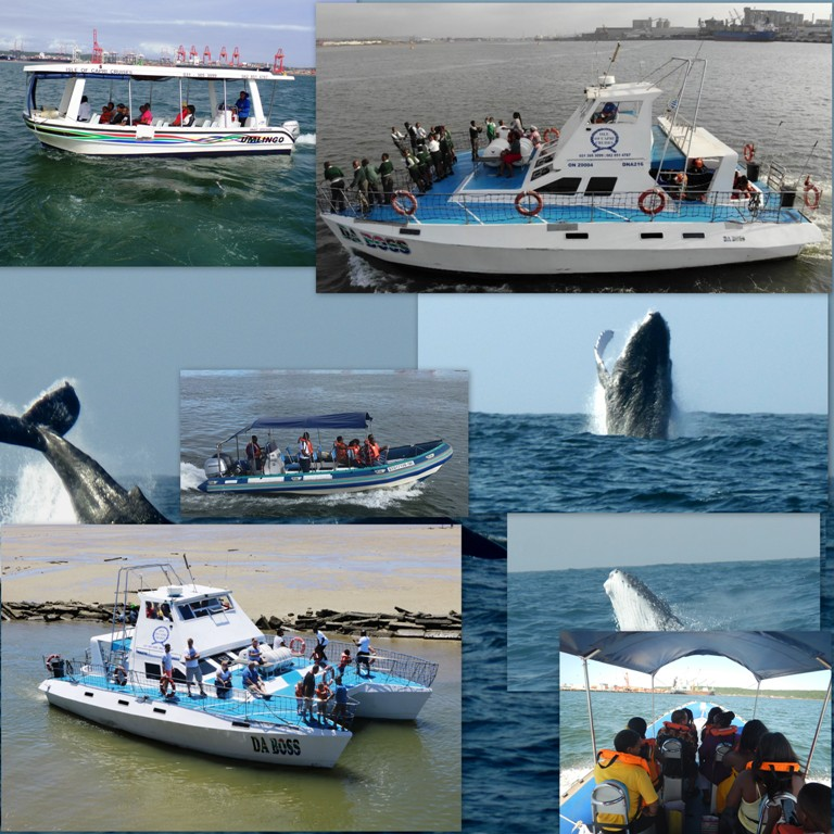 Whale watching tours Durban